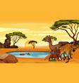 scene with animals pond vector image