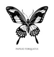 set hand drawn black and white papilio vector image vector image