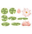 set lily lotus parts flat on white background vector image vector image