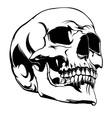 Akos Skull 1 vector image vector image