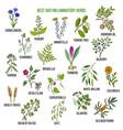 best anti-inflammatory herbs vector image vector image