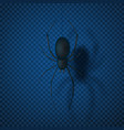 black spider isolated on transparent backdrop vector image