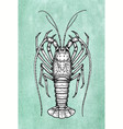 ink sketch of spiny lobster vector image vector image