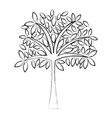 sketch draw tree cartoon vector image