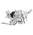animal alphabet j jay vintage