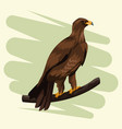 eagle in branch drawing vector image vector image