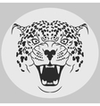 Leopard Portrait Angry wild big cat vector image