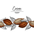cocoa border superfood drawing template vector image vector image