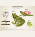 frog life cycle retro poster vector image