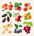 Juicy colorful berry icons vector image vector image