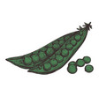 pea pod hand drawn isolated icon vector image