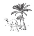 Camel and palm trees in desert