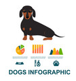 dachshund dog playing infographic elements vector image vector image