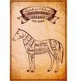 diagram cut carcasses horse vector image vector image
