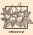 hand drawn cherries vector image vector image