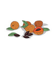 isolated clipart sapote vector image