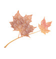 orange maple leaves isolated on white background vector image vector image