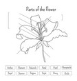 parts of the flower worksheet in black and white vector image vector image