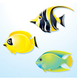 tropical exotic fishes vector image vector image