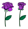 Two purple roses vector image vector image