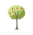 flat apple tree isolated vector image
