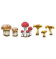 mushrooms set of different types of mushrooms vector image