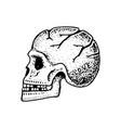 anatomical human skull skeleton head vector image
