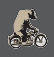 bear riding a motorcycle on a gray background vector image vector image