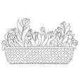 cute cartoon tulips in box or basket for flowers vector image vector image