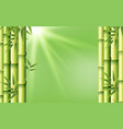 bamboo on green background vector image vector image
