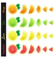 Big set of citrus slices vector image vector image