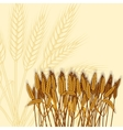 wheat ears vector image vector image