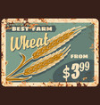 wheat rusty metal plate farm promotion vector image vector image