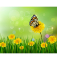 Summer background with dandelions and a butterfly vector image