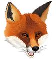 A fox vector image vector image