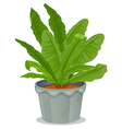 A plant inside a gray pot vector image vector image
