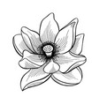 lotus flower bloom vector image