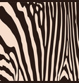 zebra pattern for wallpaper fabrics designs vector image