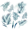 big collection palm leaves in watercolor style vector image vector image