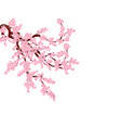 sakura lush curved branches of a cherry tree with vector image vector image