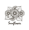 sunflower set vector image
