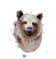bear watercolor isolated on white wildlife vector image