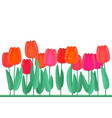 spring flowers banner with fresh red tulips vector image