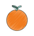 sweet orange fruit vector image vector image