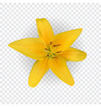 colorful yellow naturalistic lily flower on vector image vector image