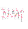 flamingo tropical pink flamingos and exotic bird vector image