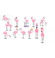 flamingo tropical pink flamingos and exotic bird vector image