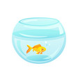 golden fish placed at aquarium vector image vector image