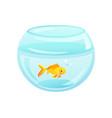 Golden fish placed at aquarium