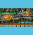 scene with two tigers in zoo vector image vector image